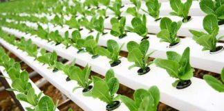 topraksız tarım nedir