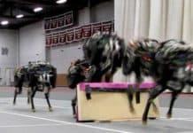 engelleri zıplayarak geçebilen çita robot