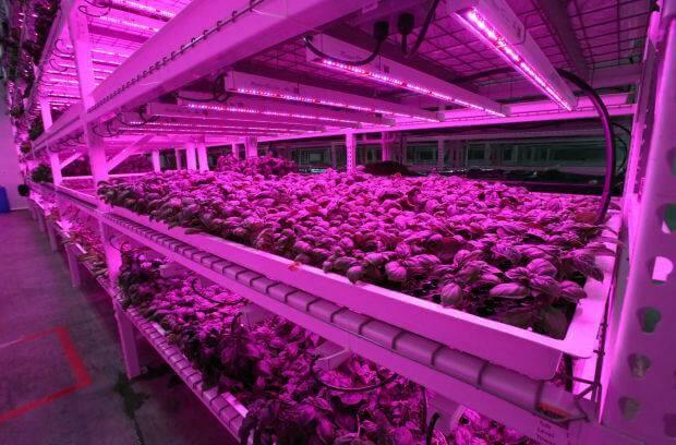 green sense gıdanın geleceği