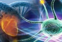 biyokimyasal tepkimeler nedir ve biyoteknoloji nedir