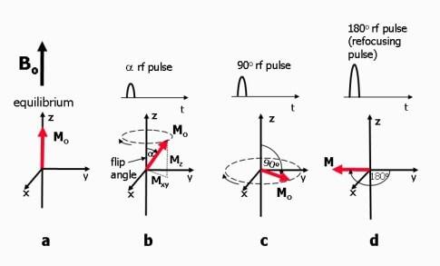 rflerin-m-uzerindeki-etkisi