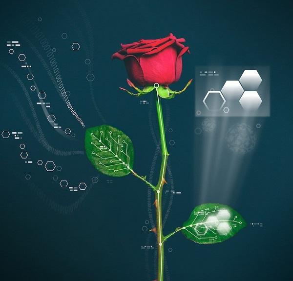 elektronik bitki nasıl yapılır.jpg