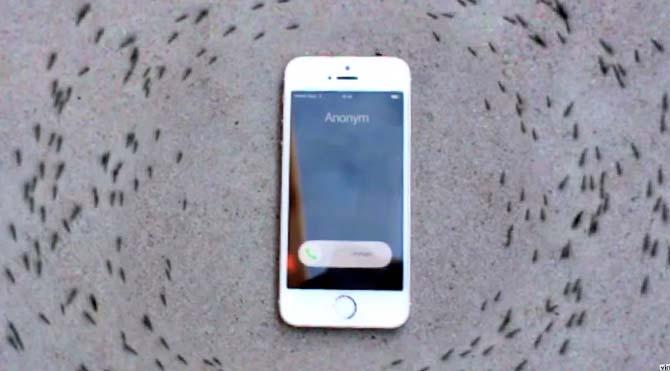 karinca-iphone-elektromanyetik-670.jpg