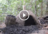 Doğada Kömür Yapımı