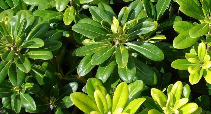 bitkilerde kalsiyum eksikliği