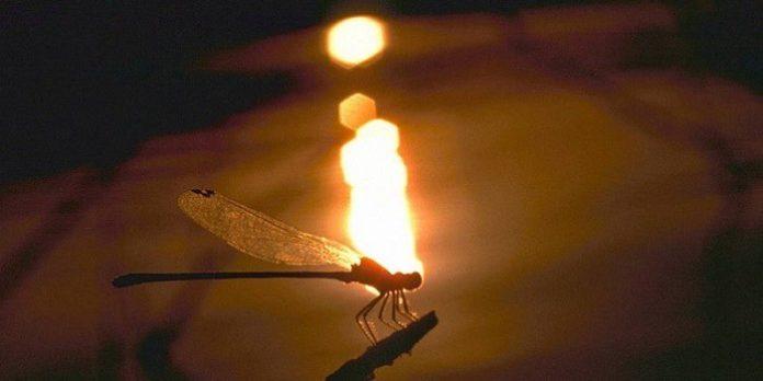 yusufçuk böceği nedir