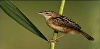 kuşlar dengeyi nasıl sağlar