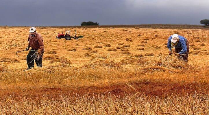 türkiyede tarım sorunu