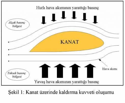 kanat yapısı