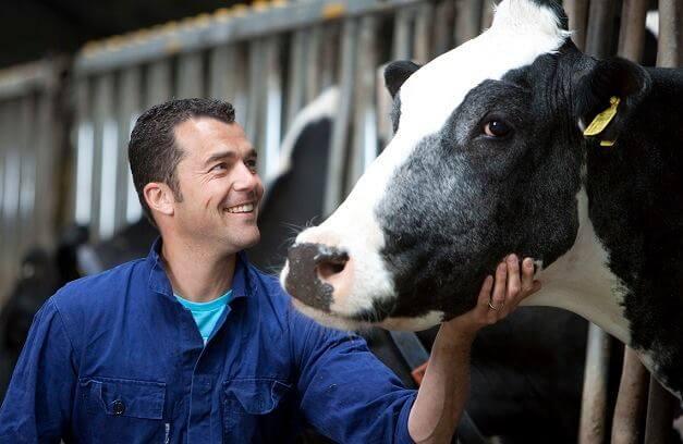 İneklerde Süt Verimi Nasıl Artırılır