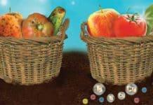 Bor Elementinin Bitkiler İçin Önemi
