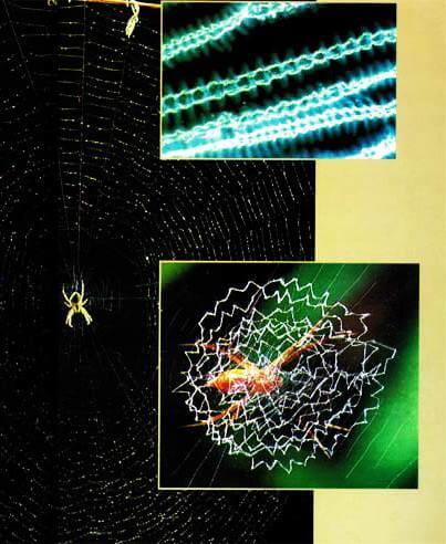 örümcek lifi üretme