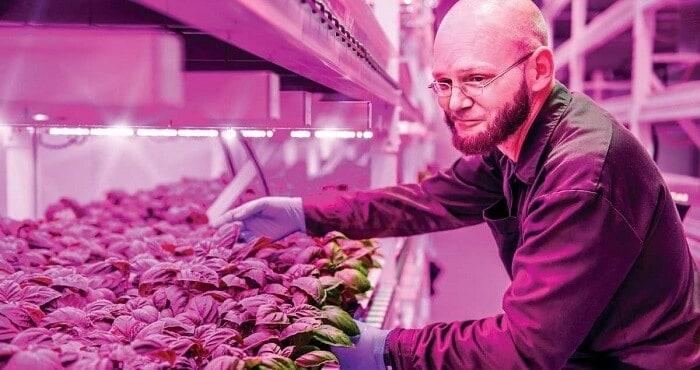 gıdanın geleceği green sense farm