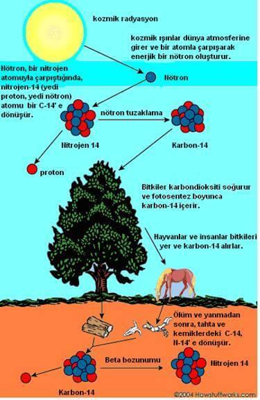 radyokarbon tarihleme nedir