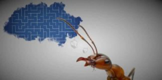 Karınca ve Mühendislik