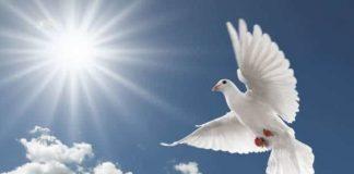 posta güvercinlerinin yön bilgisi