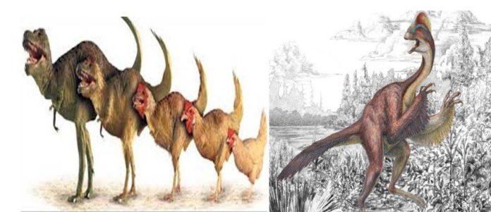dinozorlar
