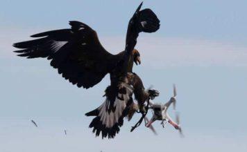 Drone Avcısı Kartallar