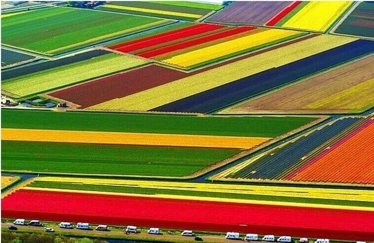hollandada tarım