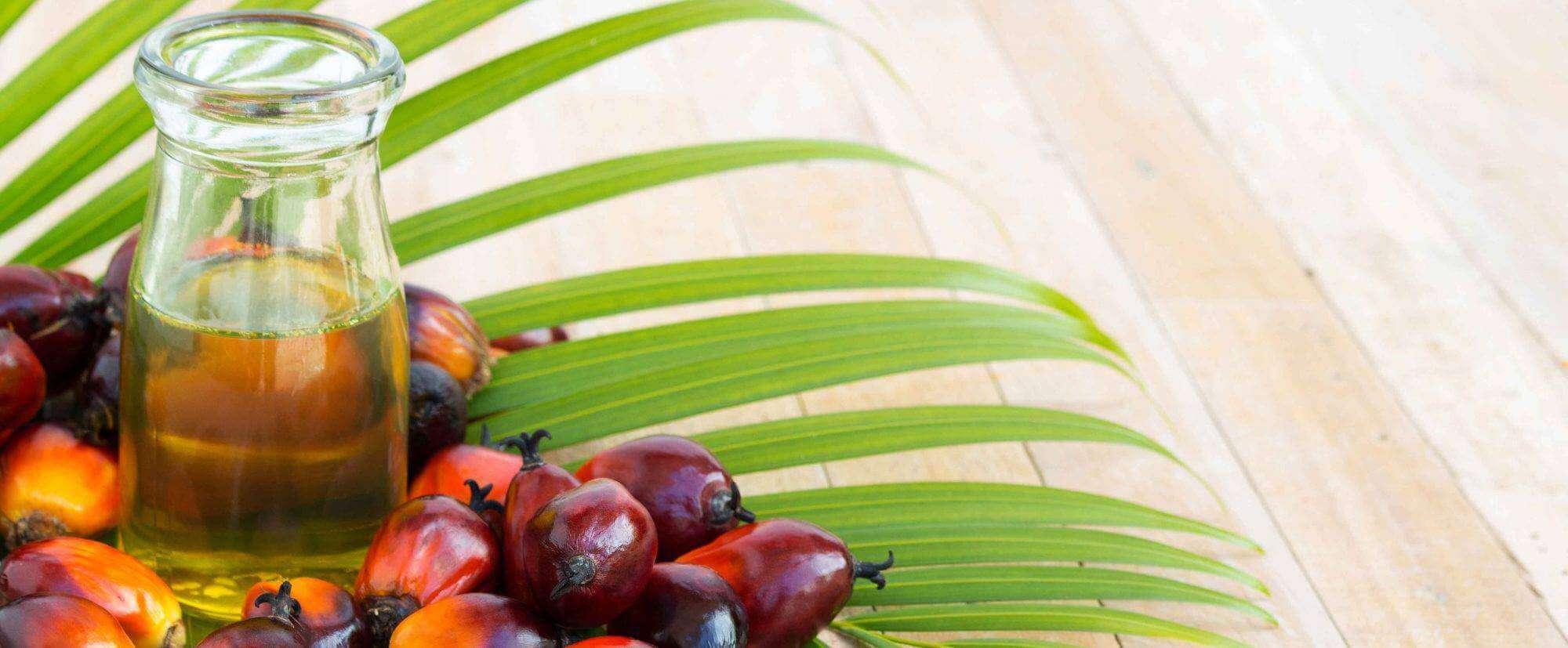 Palm Yağı İnsanlara Etkileri Nelerdir