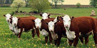 Hayvancılık Desteklemeleri
