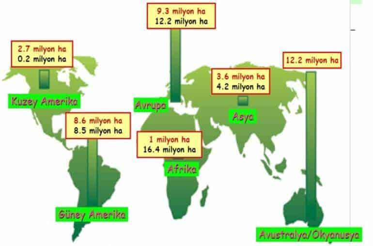 dünyada Çilek Yetiştiriciliği