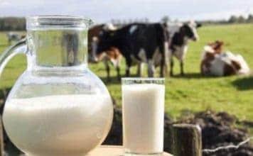 Süt Fiyatları