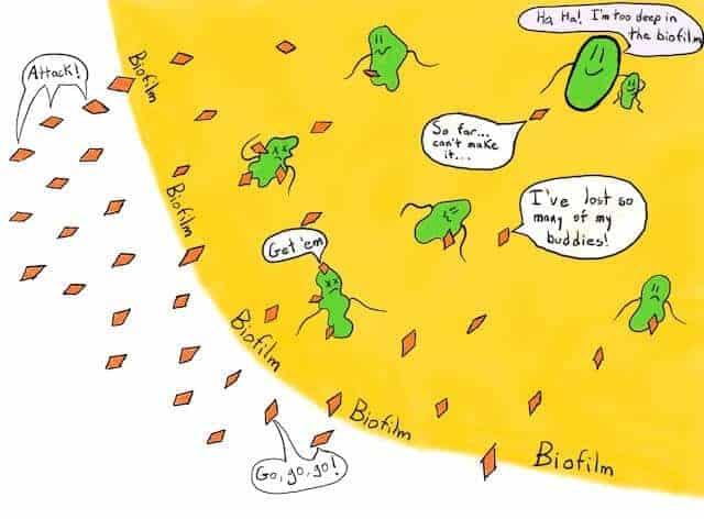 Bakteriler nerede yaşar