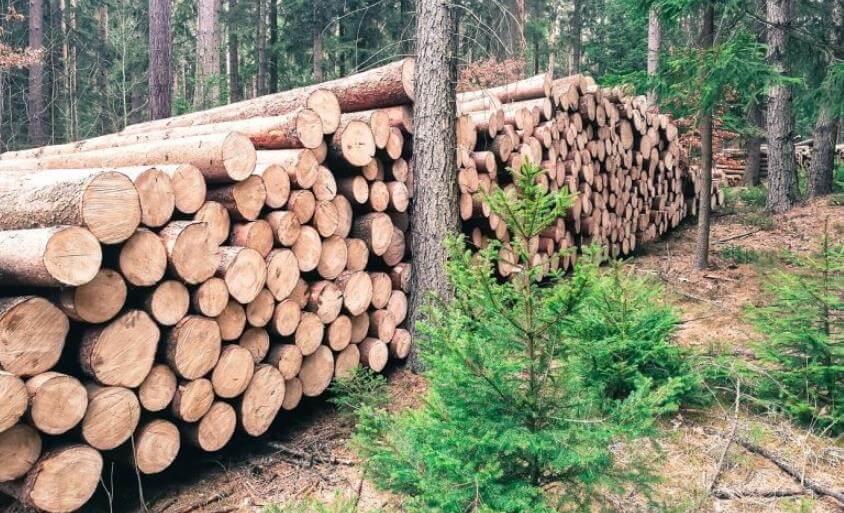 Orman Ürünleri Sanayi Nedir