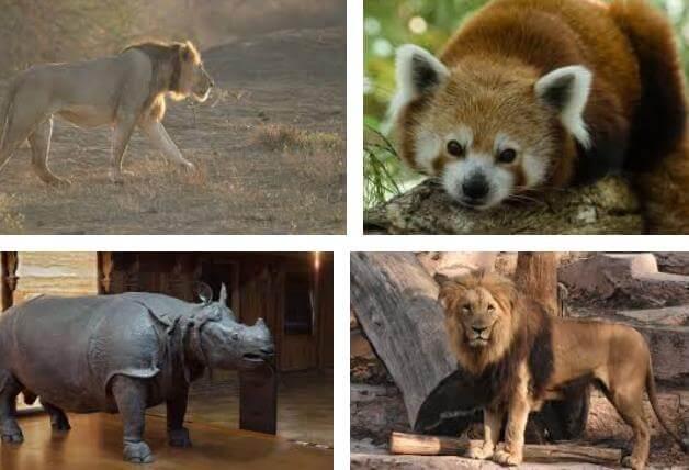 Memeli Hayvanların Özellikleri