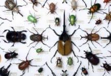 Böcek Türleri