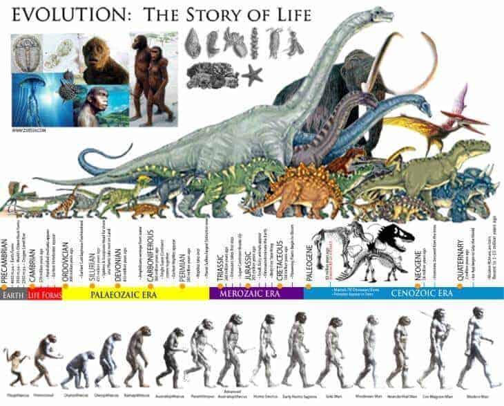 evrim nedir