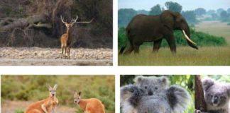 Otobur Hayvanlar