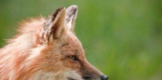 Hayvanlarda İç Üreme