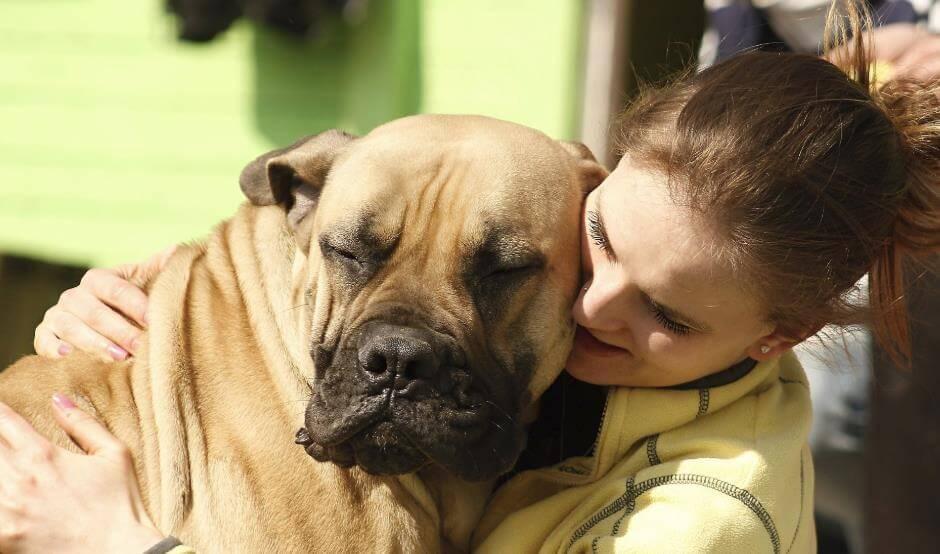 İnsanlarla Hayvanlar Arasındaki İlişkiler