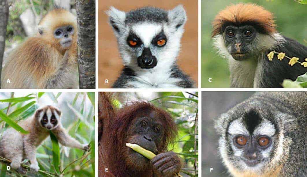 Primat Hayvanlar