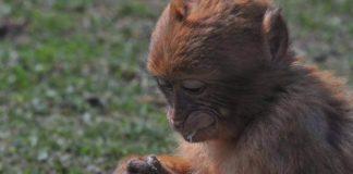 Primat Hayvanların Özellikleri