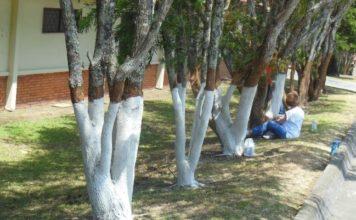 Ağaçların Altı Neden Boyanır