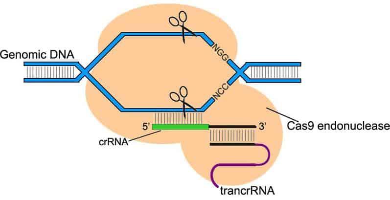 Gen Düzenleme nedir