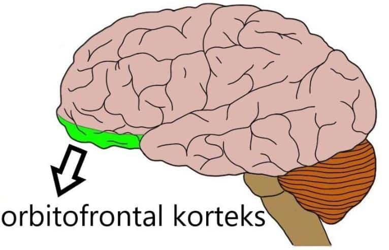 orbitofrontal korteks