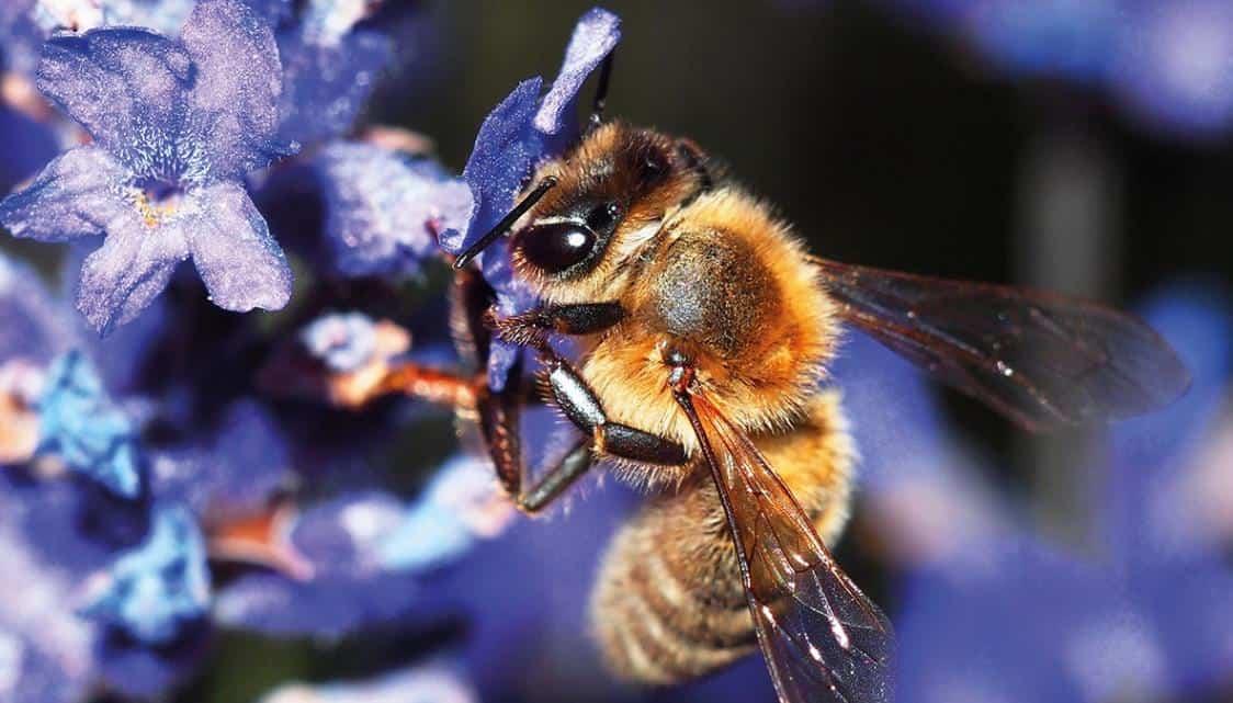 Arı Türleri ve Çeşitleri nelerdir