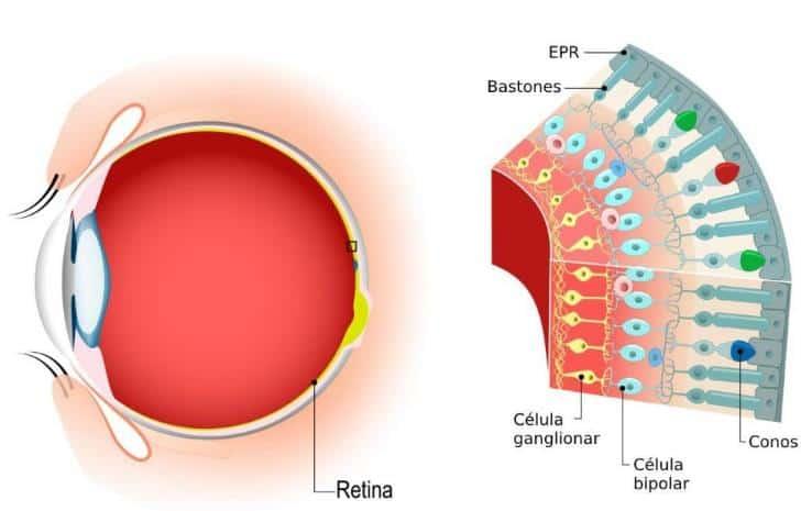 Retina Pigment