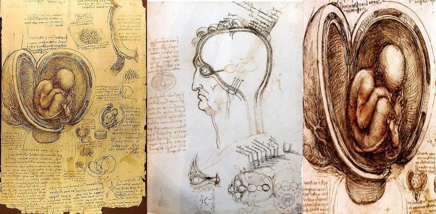 leonardo da vinci anatomi çizimleri