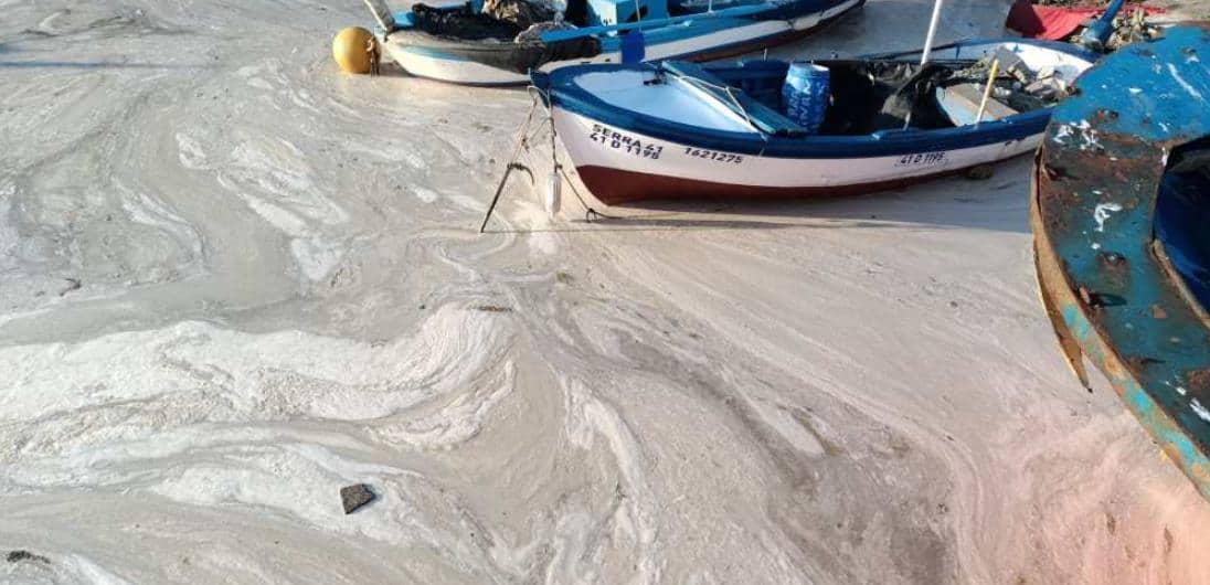 marmara deniz salyası
