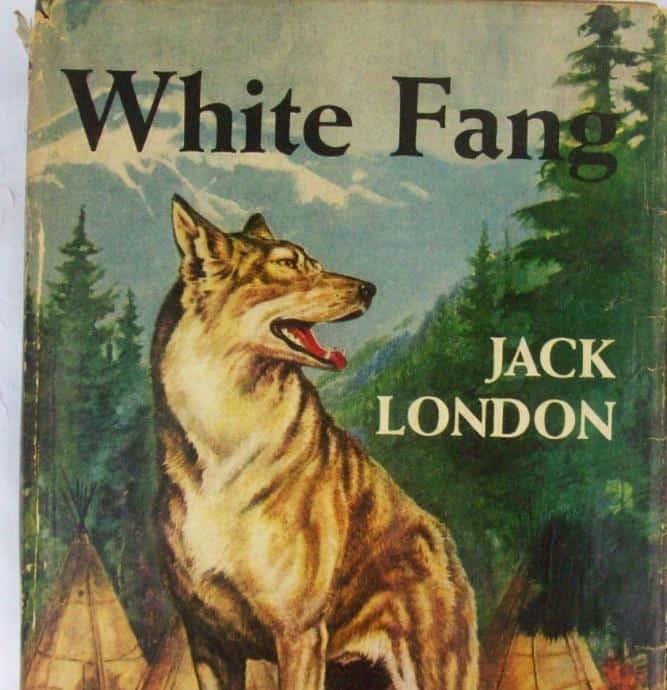 jack london beyaz diş